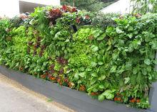plants for a vertical garden, clay soil & artificial soil