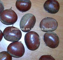 la nueva cosecha de calidad china fresco castaño