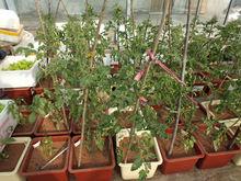 Find a good fertilizer for your green garden plants