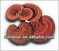 Bnp fournir reishi extrait de champignon/champignons magiques