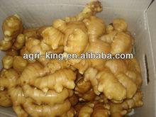 New Harvested Fresh Ginger Buyers