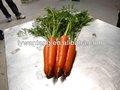 A granel fresco de zanahoria, vegetales lista de precios