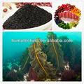 Shenyang huminrich 100% solúvel ascophylum nodosum algas extrato com bioestimulantes hormons para uso agrícola