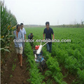 زراعة البطاطا زراعة قصب السكر الموز زراعة زراعة زراعة زراعة الكمأ كورديسيبس الكرفس