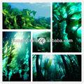 Shenyang huminrich 100% ascophyllum nodosum derivato alghe concime fogliare