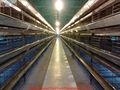 Aziende agricole in argentina/uccelli da voliera voliera