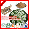 100% Natural Herbal Extract Radix Angelicae Pubescentis Extract/Tuhuo Angelica P.E.