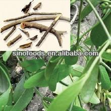 sang ji sheng herb medicine HERBA TAXILLI CHINESE TAXILLUS TWING