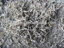 high quality dried sea kelp