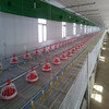 automatic poultry feeding system chicken broiler farm for sale