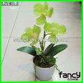 3 cabeças mini bonsai orquídea verde arranjo de flores