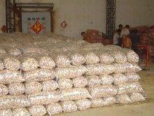 fresh vegetable natural wholesale garlic