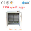 hot in sale ventilator incubator eggs for incubation importers in hyderabad