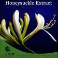 De primeira qualidade extrato de madressilva- china planta