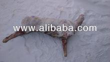 Deer meat, horns, skin