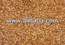 Indian Wheat- Animal Grade