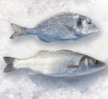 Mediterranean Sea Bass and bream