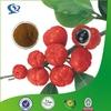 High Quality Guarana Seed Extract Powder