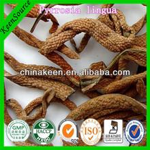 100% Natural Folium Pyrrosiae Extract/shi wei/Pyrrosia Lingua Extract