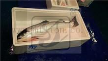 Norwegian Salmon fish