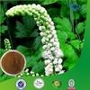 Natural Black Cohosh Extract Powder