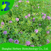 High germination Medicago Sativa seeds
