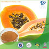 High quality 10% Papain fermented papaya extract powder