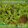 98%Forskohlin extracted from coleus forskohlii for drug use