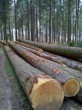 Douglas Fir logs and lumber KD 10-12% ,S4S Grade and Teak sawn timber