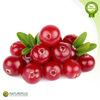 High quality cranberry fruit extract China manufacturer