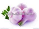 Garlic Import Chinese Natural Fresh Garlic Price