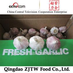 fresh garlic for sale fresh china garlic