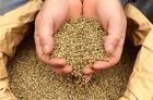 High Quality hemp seeds (New crop 2014)