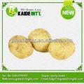 Chino de patata dulce( mejor calidad y precio)