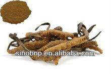 China BNP Provide Natural Cordyceps Sinensis Extract/wild cordyceps sinensis
