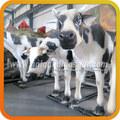 de zigong producto de la fábrica de animales de granja modelos de fibra de vidrio de la vaca