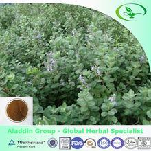 5%Vitexin /Natural Chasteberry Extract/Vitex Trifolia L.