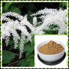 100% natural Black Cohosh Extract Triterpenoid saponins