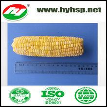 Sweet Frozen Corn Producer