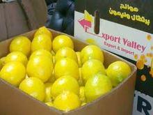 Fresh Yellow lemon from MEXICO