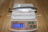 sardines companies sardine packing sardine fish scientific name