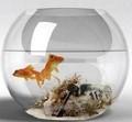 claro todo el escritorio de vidrio florero plato de pescado