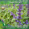 GMP Factory supply Sage extract of 95%Carnosic acid