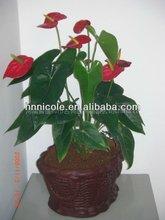 bio green green plant soil