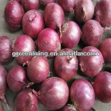 Fresh round shape onion wholesale organic