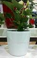 Chinês vaso de flor, baratos vaso de jardim, vasos decorativos de plástico
