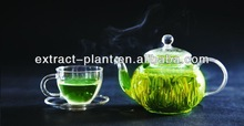 Prevention of tooth decay and gum disease Green Tea Extract Green tea extract 90% egcg GTP-30% Polyphenols30%