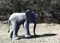 venta caliente tamaño de la vida caminar traje de elefante