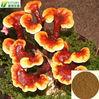 red reishi extract/ganoderma lucidum extract