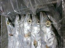 Frozen Ribbonfish WR